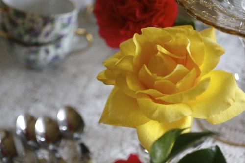 gold medal grandiflora rose, rose