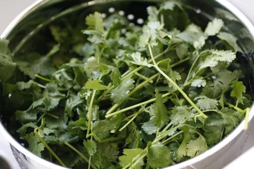 cilantro, coriander, cilantro sprigs
