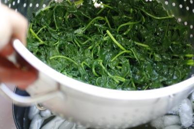 blanched cilantro