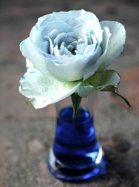 blue+rose
