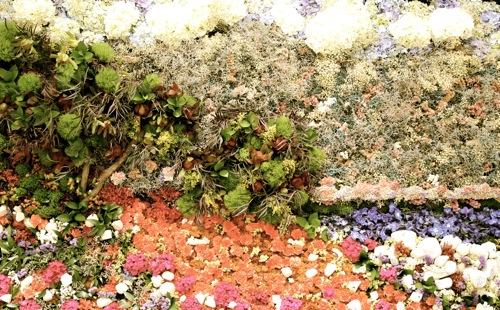 cap martin, near menton floral arrangement