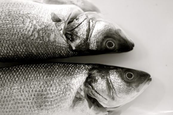 whole fish, mediterranean sea bass, branzino fresh image