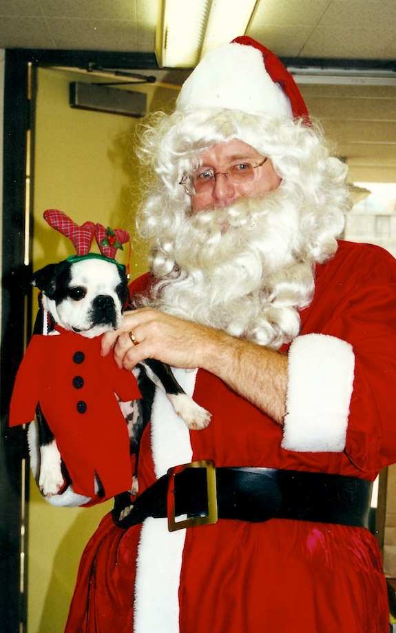 Boston Terrier and Santa