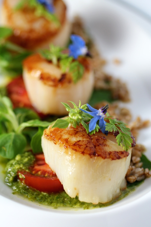 Scallop, Farro, Micro Greens, Lemon Basil Sauce - Taste With The Eyes