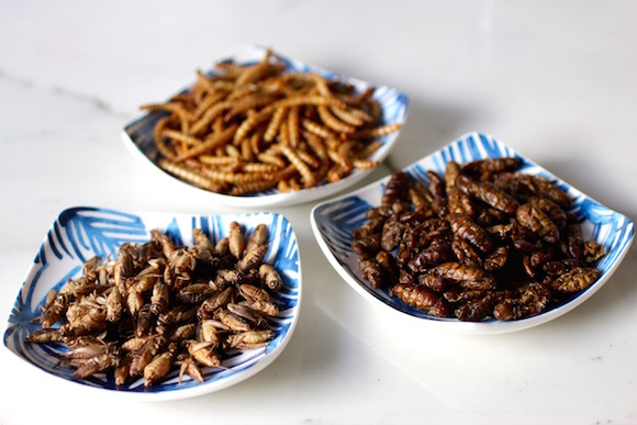Edible Insects: Crickets, Silkworms, Beetle Larvae