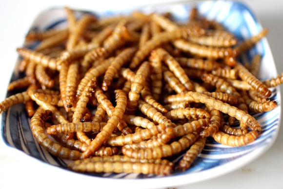 Edible Beetle Larvae
