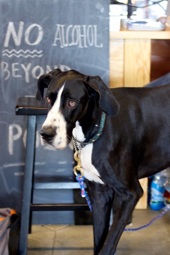 Brouwerij West Canine Ambassador