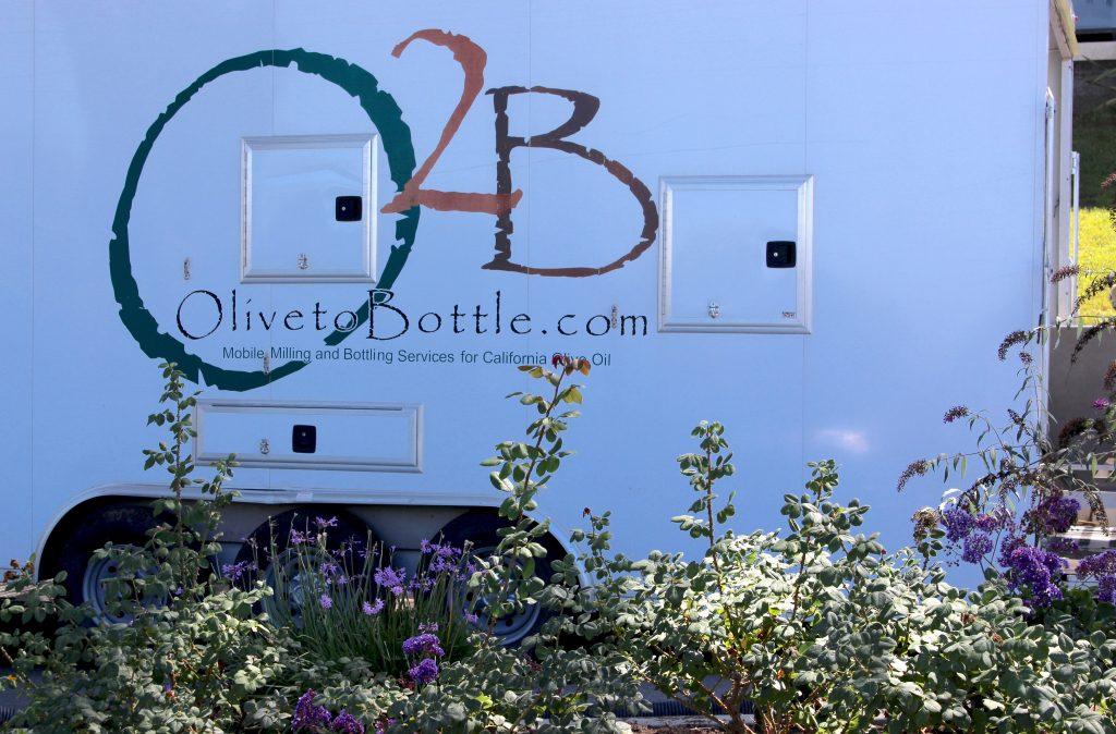 Olive 2 Bottle