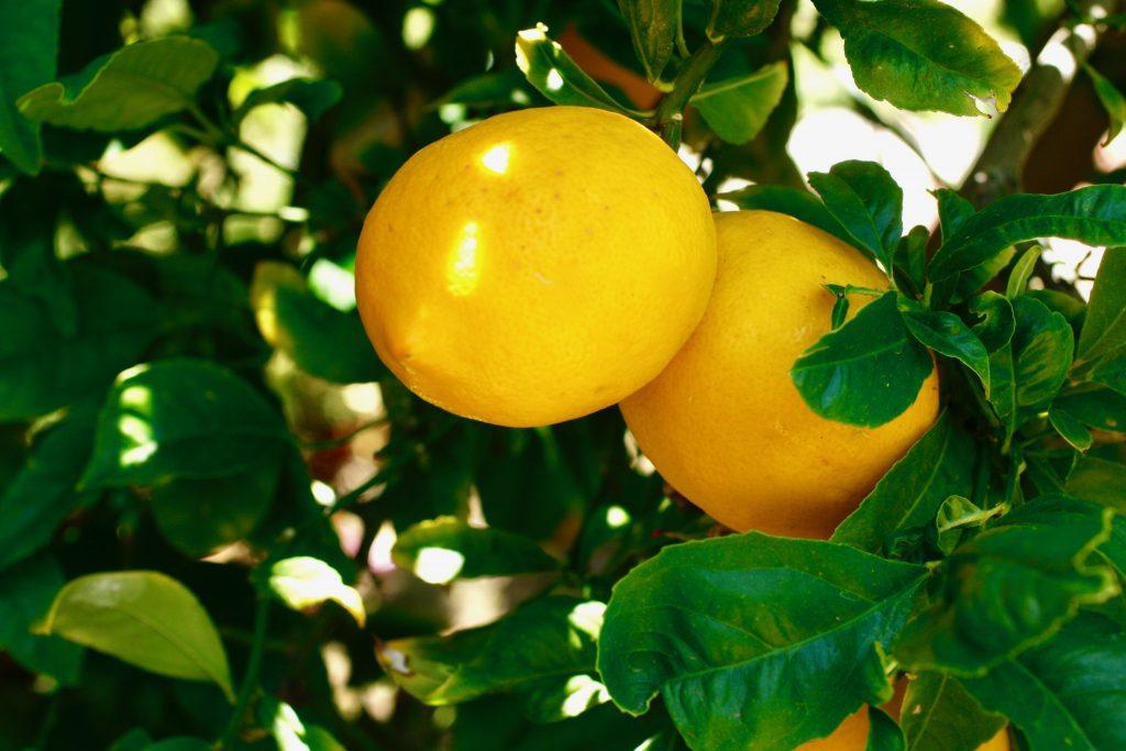 meyer lemon recipe